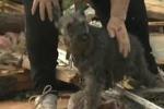 Tornado negli Usa, ritrova il suo cane durante intervista tv