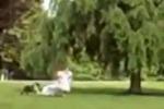 Sposa scappa inseguita dal suo cane: le scene