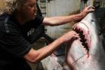 California, catturato lo squalo mako più grande del mondo