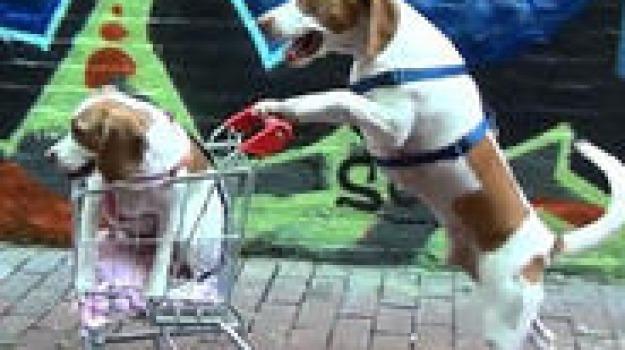 Maymo Il Beagle Che Porta A Spasso Il Suo Cucciolo Giornale Di Sicilia