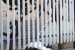 Tragedia a Palermo, uccide la sorella e si lancia dal balcone