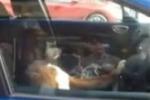 Stufo di aspettare in auto, cane si attacca al clacson