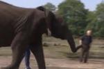 Nelly, l'elefante che fa i pronostici per i Mondiali in Brasile