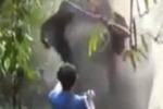Turista ferma un elefante con un gesto della mano