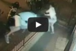 Bifolco, spunta video sull'irruzione in sala giochi