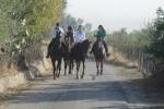Tutti in... sella: la Sicilia nascosta si scopre con i tour a cavallo