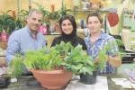 Realizzare un orto nel balcone: così i broccoli crescono nei vasi