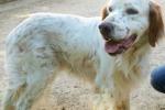 Anche gli animali su Facebook E da Palermo la storia di Tao