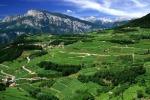 A Palermo tutto il gusto dei vini del Trentino