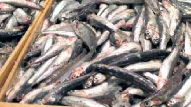 Trapani pesci in vendita senza i controlli scatta l for Vendita pesci