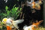 Trucchi per l'acquario perfetto Occhio a spazi e temperatura
