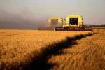Agricoltura, imprese in calo