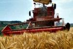 Grano siciliano in Bulgaria: il progetto di una società ennese