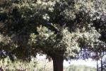 Palermo, per rubare una bicicletta abbattutto albero di 4 metri
