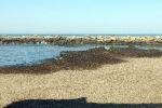 Troppe alghe, i turisti disertano Selinunte