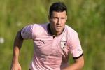 Accolto il ricorso del Palermo, revocata la squalifica di Andelkovic
