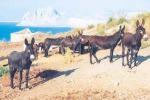 Workshop sulle aree rurali, l'asinello di Pantelleria sbarca a Bruxelles
