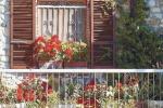 Più piante per ornare i balconi: in Sicilia piacciono le pomelie