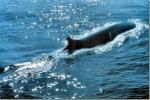Trenta balenottere avvistate a Lampedusa
