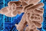 I germogli di fagioli, ecco la fonte del batterio killer
