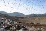 Rifiuti a Palermo, l'Amia accusa Comune e Regione