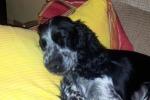 Relax d'estate nelle pensioni, per i cani più qualità dei servizi