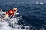 Cani da salvataggio in mare: Mondello avrà una postazione