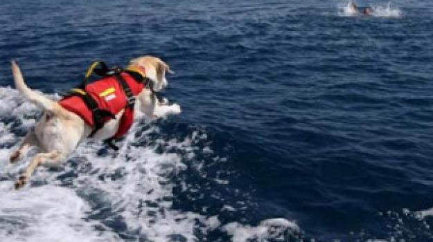 cane eroe salva bambina salerno, Sicilia, Società