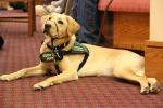 Enna: ciechi, a rischio cani guida e servizi Operatori in stato di agitazione