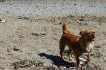 Spiagge per cani, ecco dove in Sicilia Ma le associazioni: «Troppo poche»