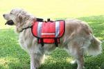 Meno collari e più pettorine: cambia la passeggiata per i cani