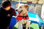 Tutti in piscina per perdere peso Cani in forma grazie all'idroterapia