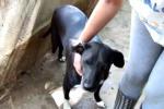 Censiti mille cani randagi tra Sciacca e Ribera