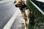 Vittoria, il problema dei cani randagi: scattano sanzioni