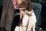 Avola, passeggiata a quattro zampe per oltre 100 cani