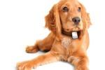 Nel collare un dispositivo Gps: cani e gatti, meno smarrimenti