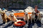 Salvataggi a quattro zampe Cani al mare per fare sport