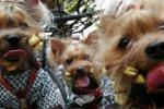 Cani e gatti con zecche e pulci Gli esperti: troppo caldo, più cure
