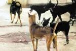 Emergenza randagismo, cani aggressivi in centro