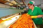 Agricoltura, la carota novella di Ispica raddoppia il fatturato