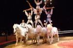 Animali, trapezzisti e cavallerizzi: è arrivato il circo