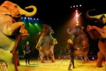 Giraffa fugge dal circo di Favara, riacciuffata in campagna