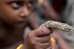 Passione per le specie esotiche A Racalmuto la fiera dei rettili