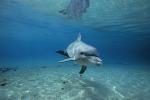 Il morbillo che uccide i delfini: in Sicilia 13 morti da inizio anno