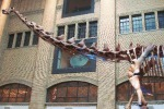 Patagonia argentina, gli scienziati trovano i resti del mega dinosauro