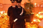 Tre arresti per detenzione di marijuana e cocaina