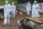 Ebola, un caso sospetto in Svezia