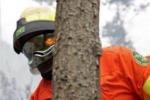 Forestali a Caltanissetta senza stipendio: il futuro è più incerto