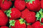 Frutta, il tempo delle fragole Gli esperti: eccellenze in Sicilia