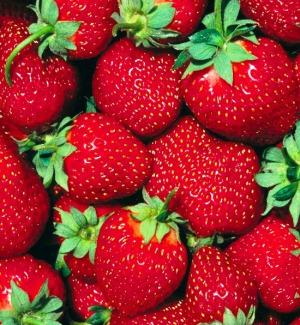 La Sicilia paradiso per le fragole Qualità apprezzata anche all'estero